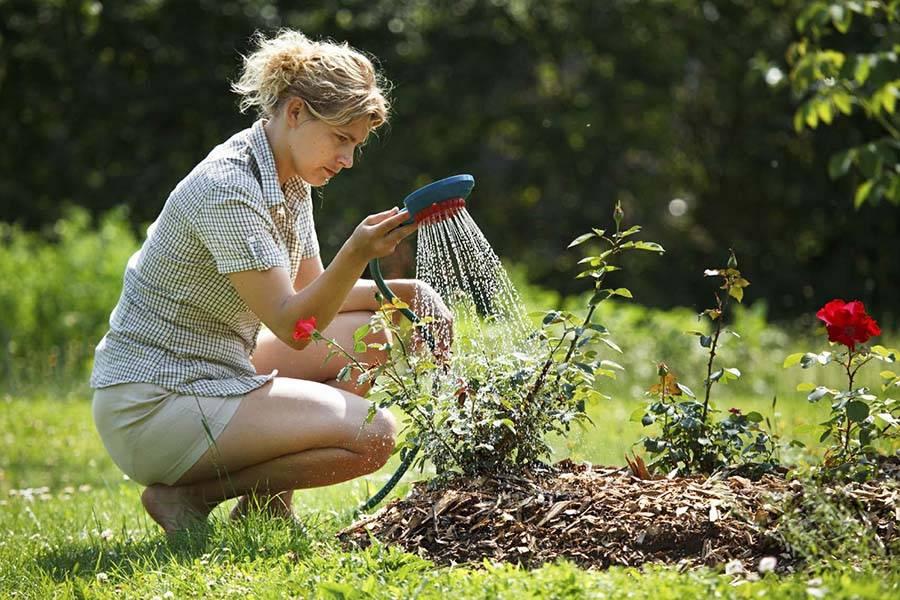 Советы по поливу сада летом